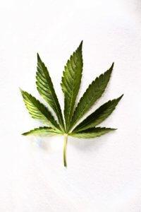 medical marijuana2